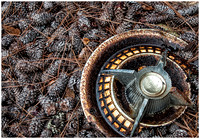 Hubcap in Pinecombs