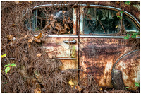 Rusted Car in Brush