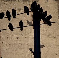 Birds on a Light Pole