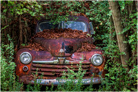Vintage Ford in the Woods